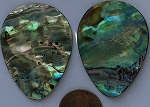 shell - abalone  teardrop flat Pendants <b>About 40x30mm</b>     per   <b>Piece</b>