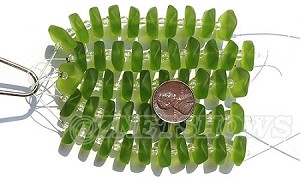 Cultured Sea Glass button freeform Beads <b>14-15mm</b> 22-Olive per <b>5-str-hank</b>