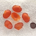 Cultured Sea Glass sea shell Pendants <b>31x22mm</b> 83-Tangerine per <b>6-pc-bag</b>